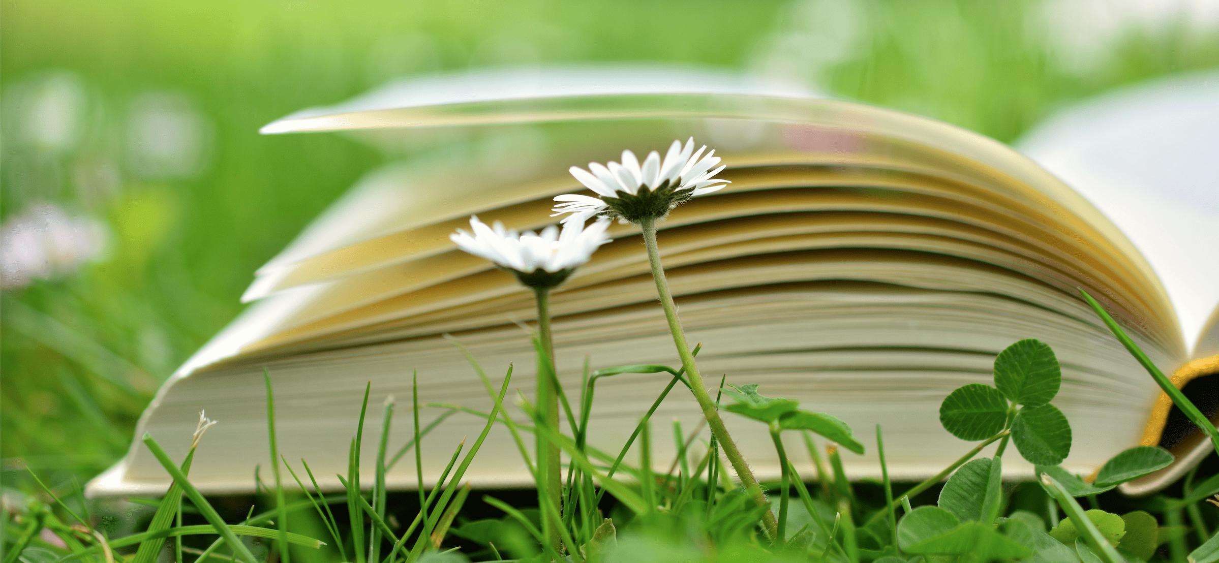 Studie, bron: Pixabay