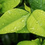 Groen, fris blad